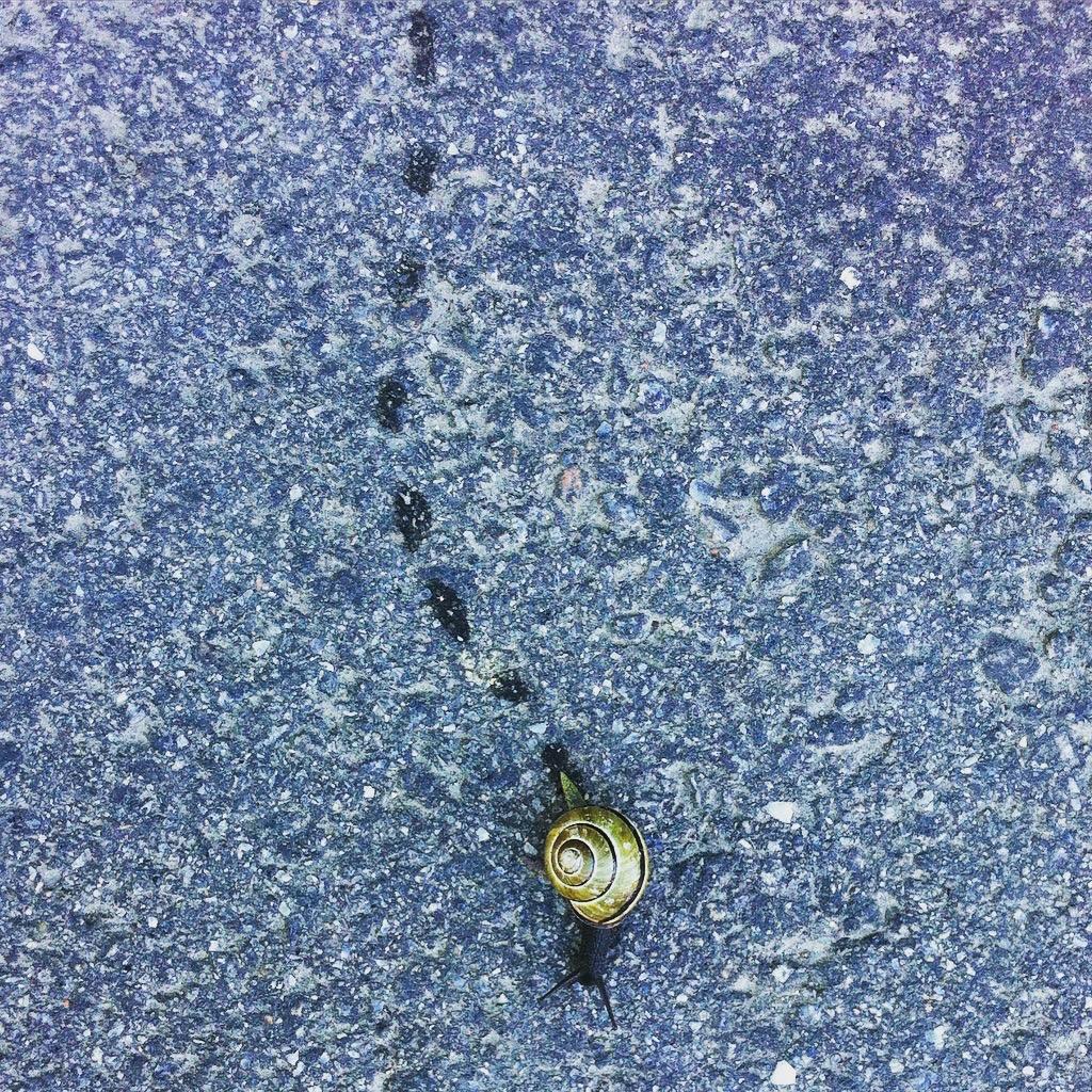 Snigel som gör spår på asfalt