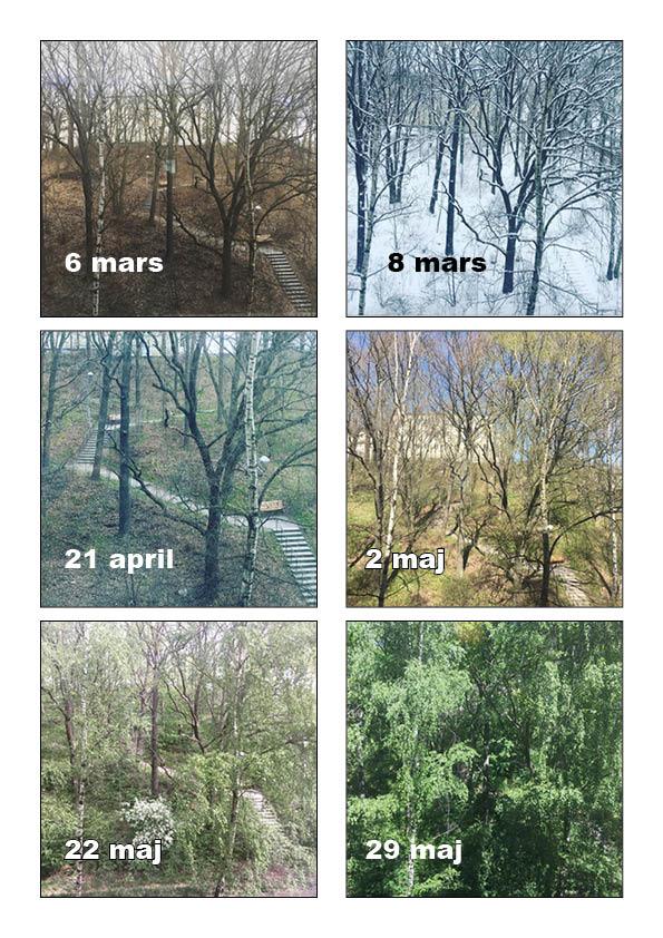 utsikt från kontorsfönster olika årstider